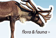 scandinavian mountains flora and fauna